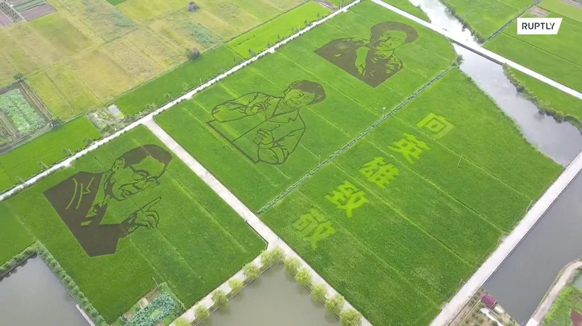 Chinese farmers create rice field murals of medical experts