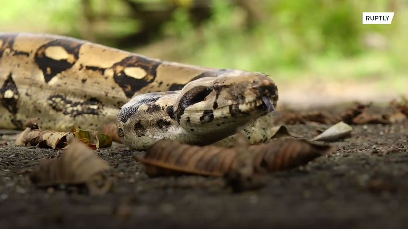 Drug lord's snakes go wild in Colombia