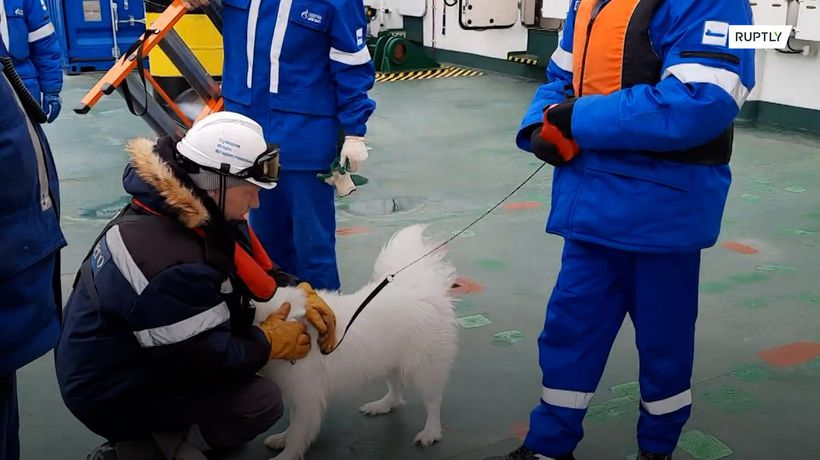 A dog was rescued by the crew of a Russian icebreaker