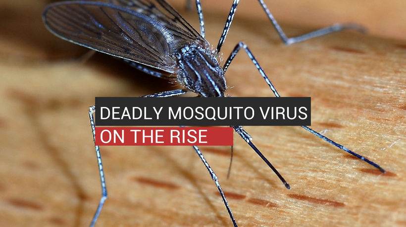 Deadly Mosquito Virus On The Rise