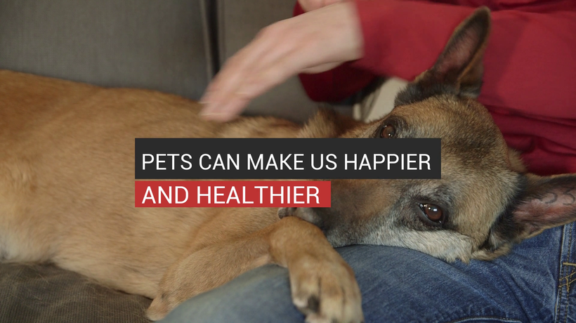 Pets Can Make You Happier And Healthier