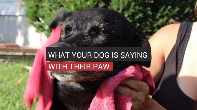 What Your Dog Is Saying With Their Paw