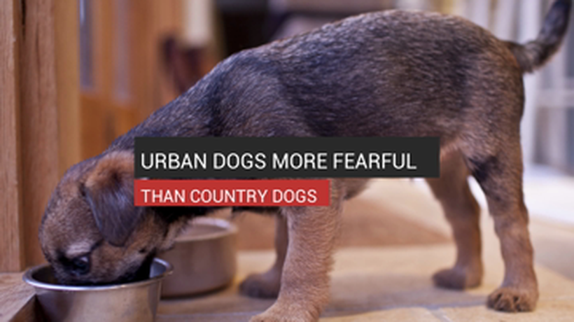 Urban Dogs More Fearful Than Country Dogs