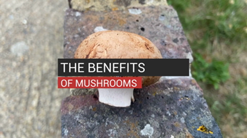 The Benefits of Mushrooms