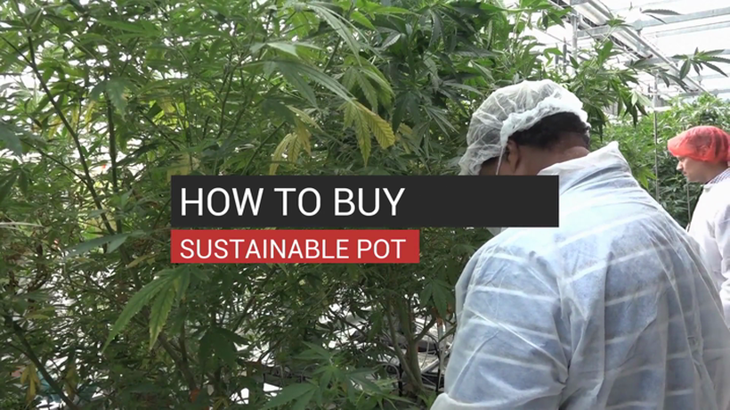 How to Buy Sustainable Pot