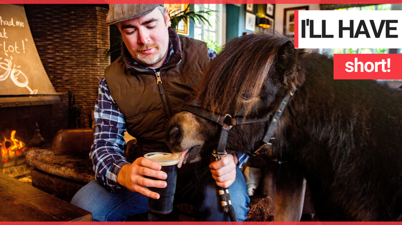 Shetland pony that regularly pops in to his local pub for a Guinness