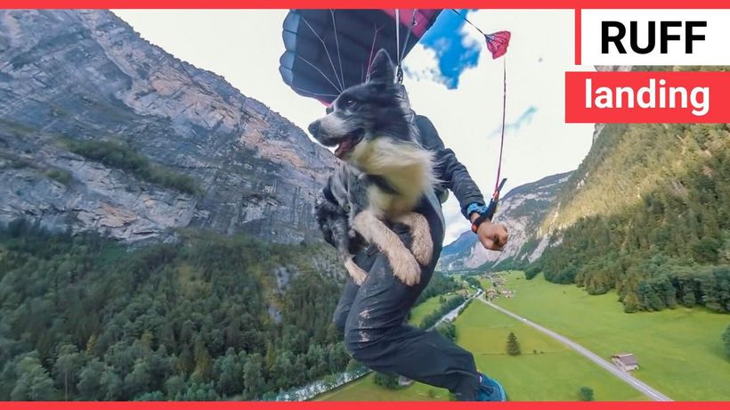 Watch this daring DOG leap off a 2,000ft cliff and parachute back down to earth