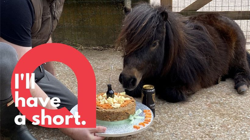 Guinness loving pony celebrates birthday