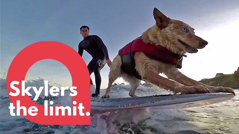 Amazing footage of a talented surfing dog