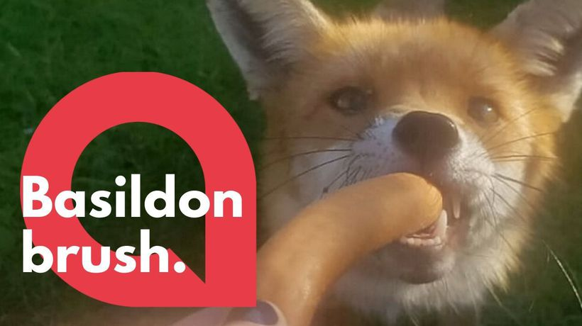 A fox and her cubs take over a family's garden