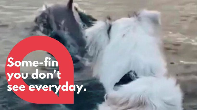 Watch this dogs adorable reaction to seeing dolphins for the first time