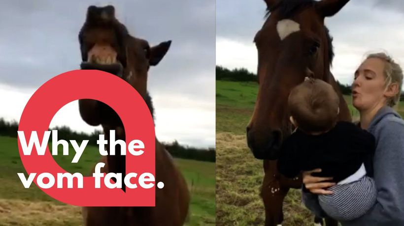Hilarious moment eight month old baby vomits on horses face