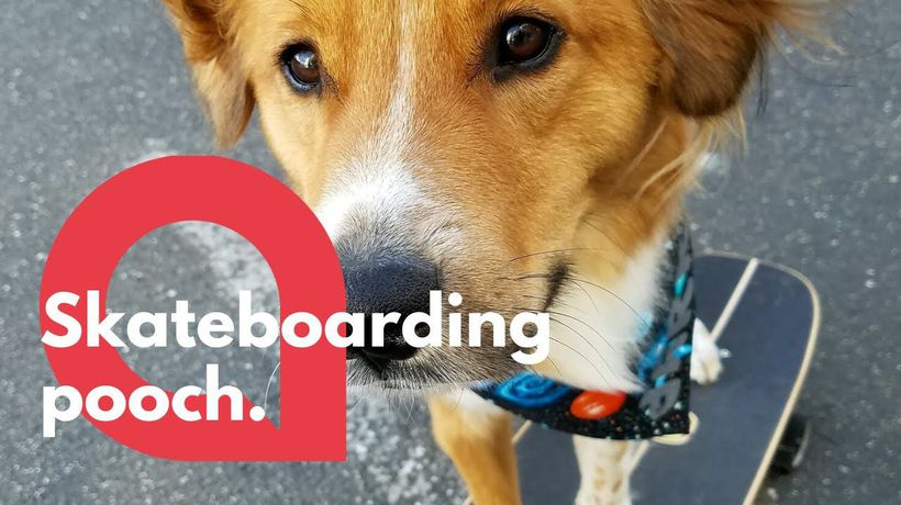 Pup spends quarantine learning how to skateboard