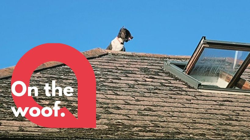 Couple return home to discover their dog on the roof