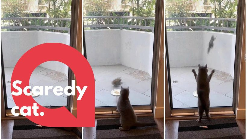 Hilarious video shows territorial kitty scaring off squirrel