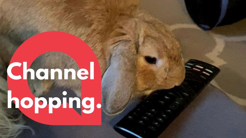 This adorable bunny appears to have a problem with his owner watching television