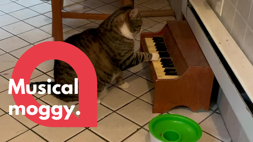 Cat plays piano to tell his owners when he's hungry