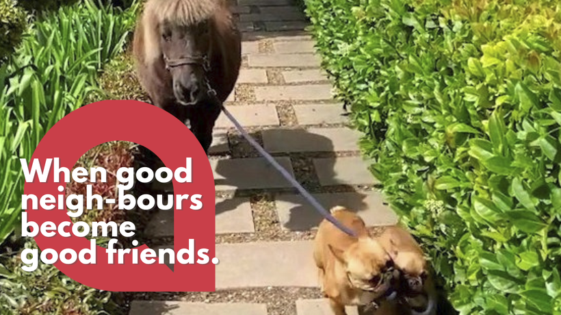 A pair of dogs are filmed taking their owner's horse for a WALK