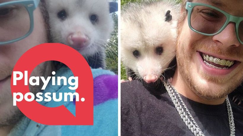 Meet Opie - a house-trained opossum who loves playing with cats