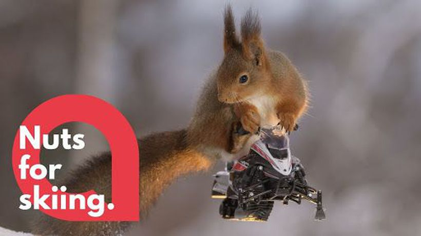 Squirrels pose on miniature wooden skis and snowmobiles