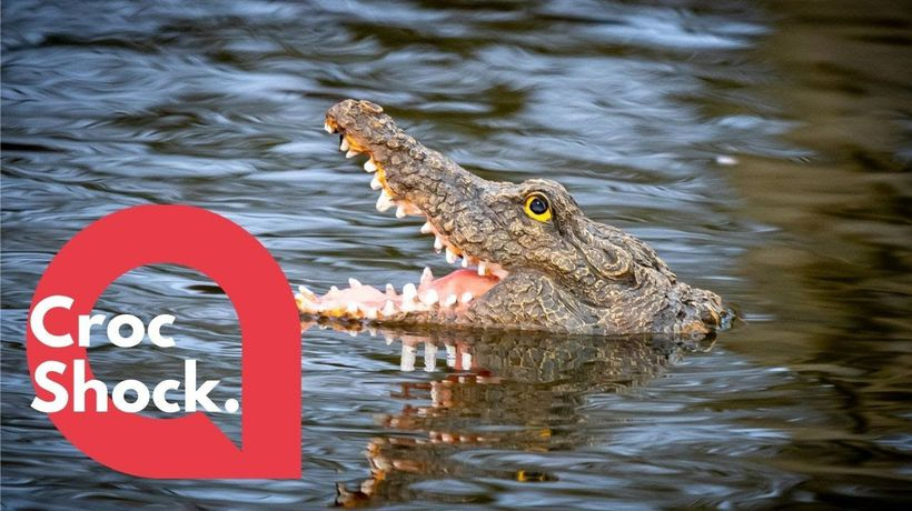 Villagers left bemused following the mysterious appearance of an ALLIGATOR