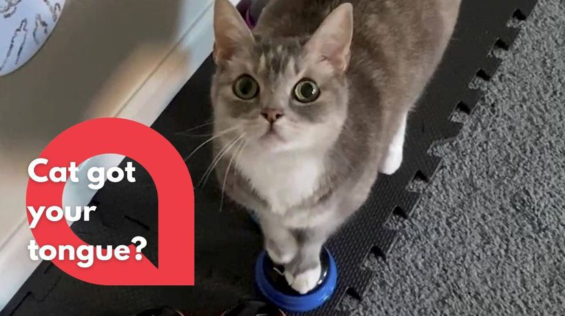 Watch as this genius cat uses paw-activated buttons to speak with her owner