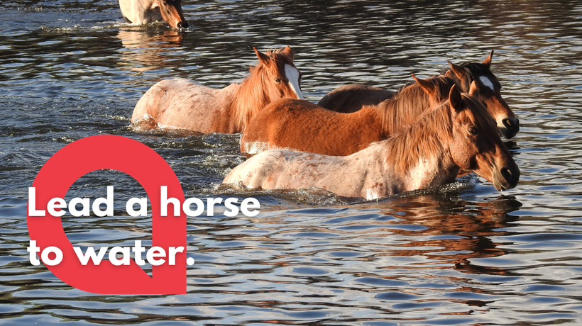 A herd of wild horses are caught splashing through a deep river