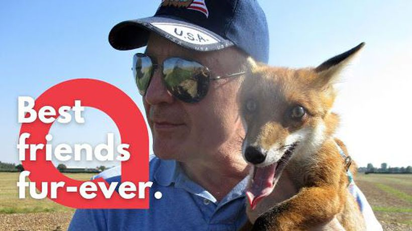 Man adopts an orphaned fox after it crawled into his jacket sleeve for a nap