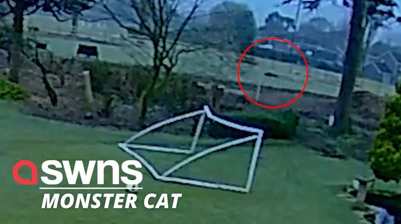 Suspected puma caught sprinting through a field in the UK
