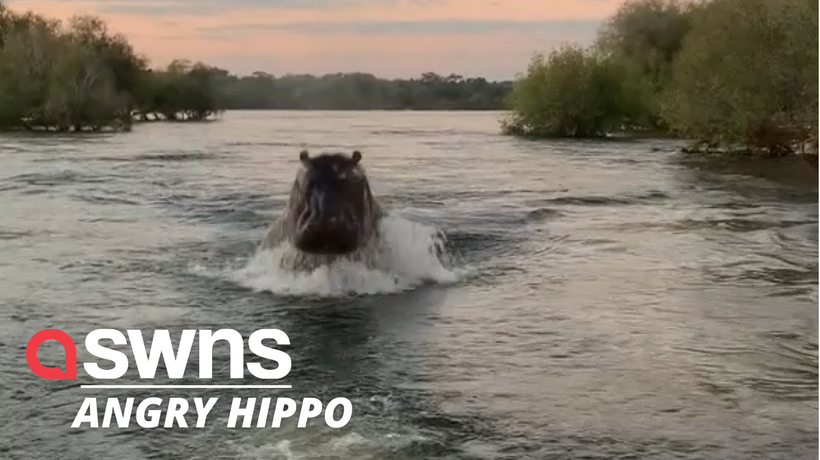 Terrifying moment sightseers get chased by a giant HIPPO through Zambezi River in Zambia