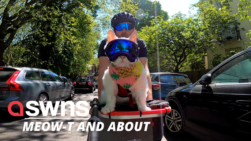 Meet Sigrid: the kitty who loves cycling around London in her owner's basket