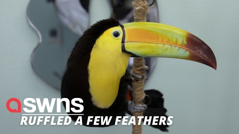 """US woman who adopted pet toucan says the bird has completely """"taken over her life"""""""