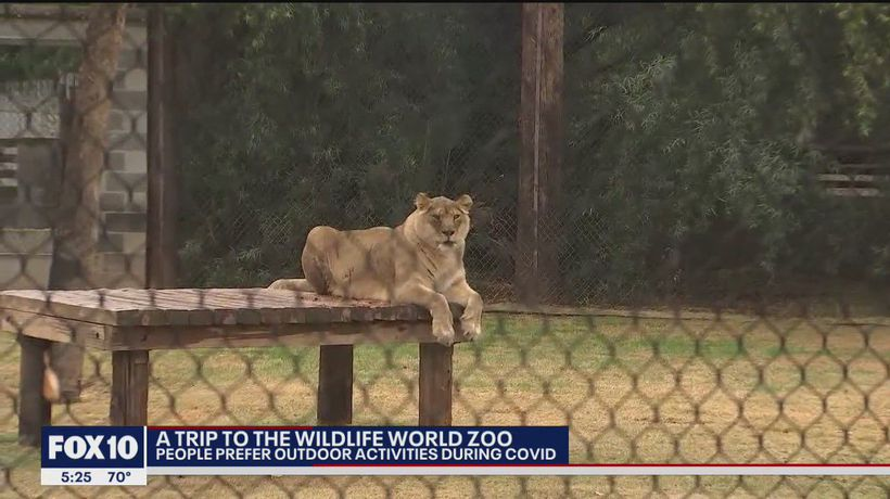Looking for something fun and safe to do? Many are visiting the Wildlife World Zoo
