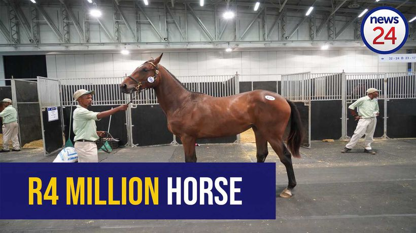 WATCH: This race horse just sold for a cool R4 million