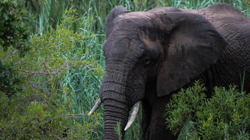 Tips for an Elephant Safari