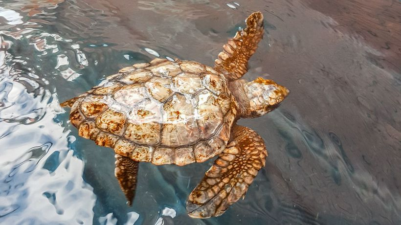Behind-the-scenes at the Two Oceans Aquarium: Turtles in rehab and Yoshi incredible journey