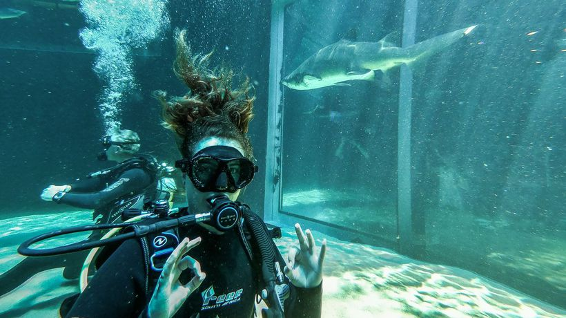Behind-the-scenes at Two Oceans Aquarium: Swimming with predators