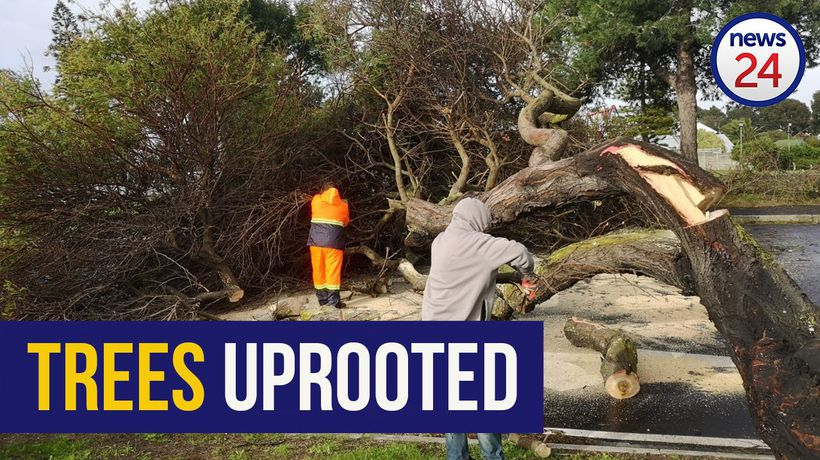 WATCH | Storm batters Cape Town, strong winds uproot trees