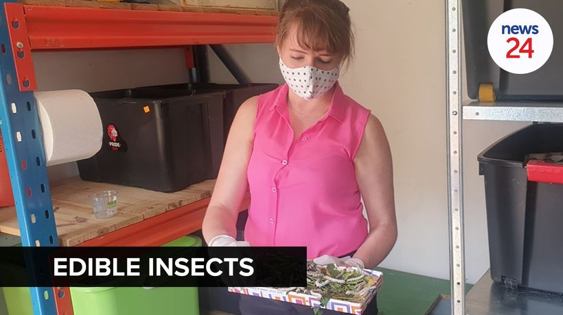 WATCH | Insect farmer turns silkworms and crickets into delectable delicacies