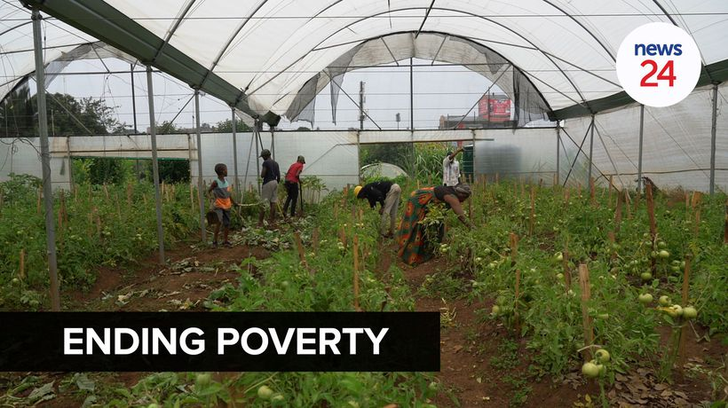 WATCH | Passion for planting: Joburg inner city farmer's quest to alleviate poverty in her community