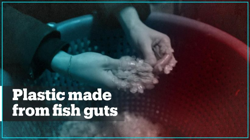 Student invents plastic made from fish guts