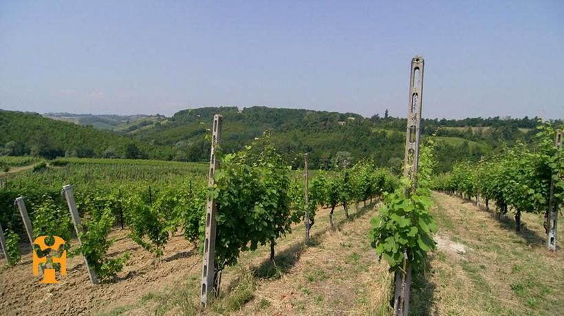 Italy Discoveries - Wine Tasting