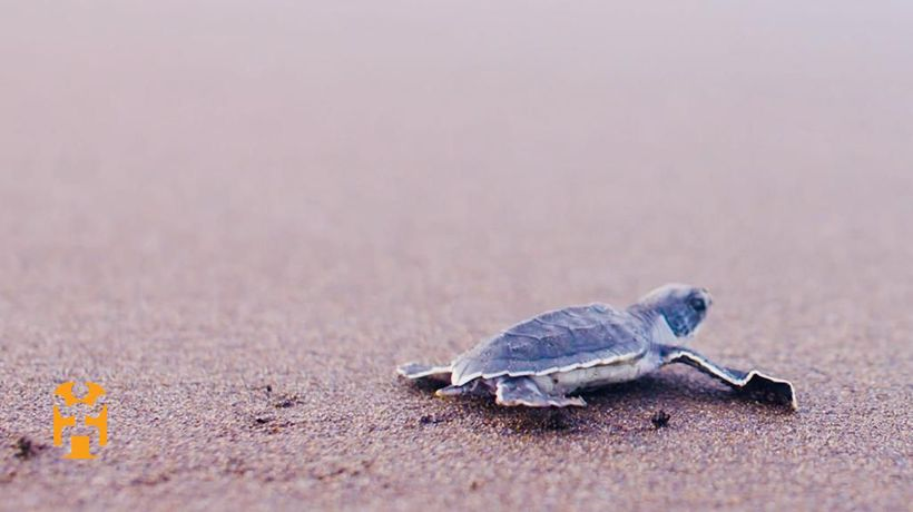 Positive Footprints - Turtle Conservation in Costa Rica