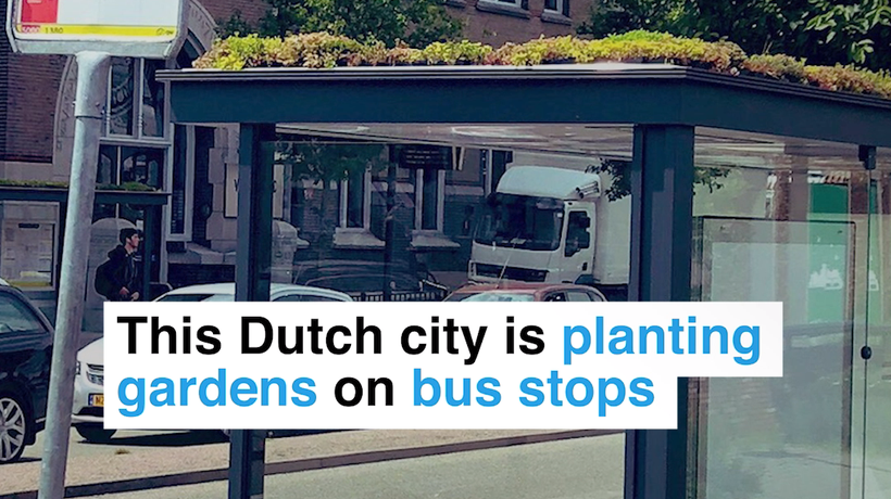 This Dutch City is planting gardens on bus stops