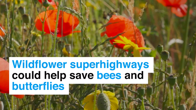 These nature super highways could save our biodiversity