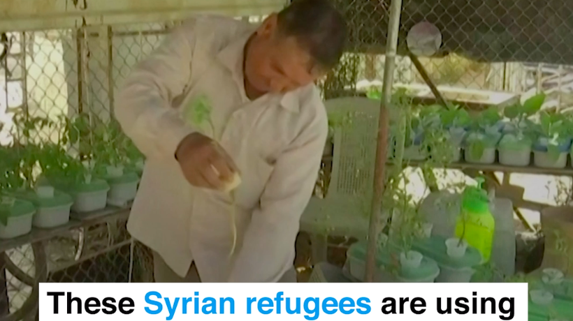Syrian Refugees Use Water And Old Mattresses To Farm