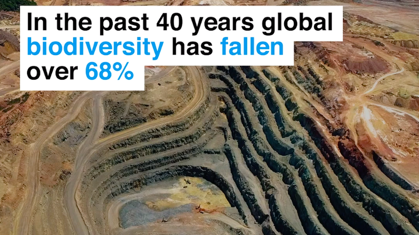 Global biodiversity fell over 68% in four decades, the World Wildlife Fund (WWF) says