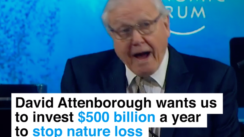 David Attenborough wants us to invest $500 billion a year to stop nature loss