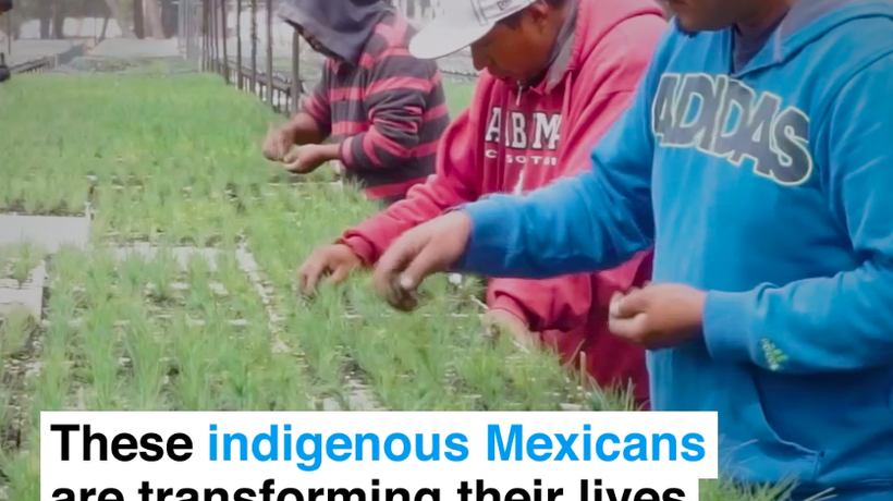 These indigenous Mexicans are transforming their lives through the power of trees