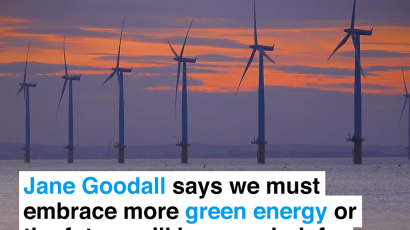 Jane Goodall says we must embrace more green energy or the future will be very dark for our children